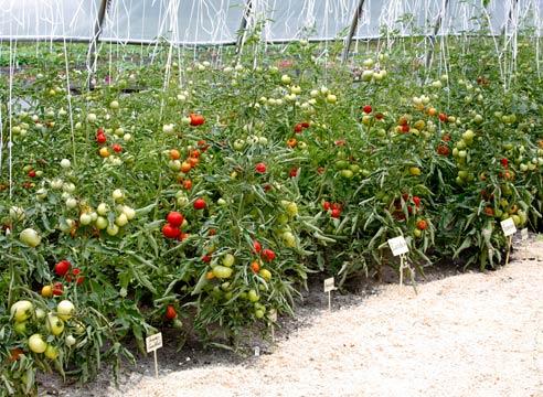 Казахстанцев обеспечат овощами