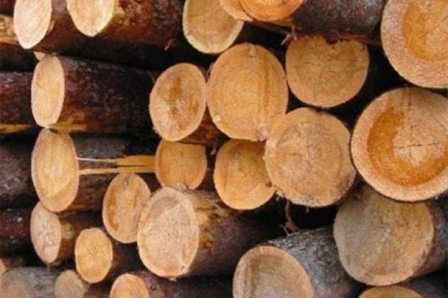 Снят запрет на экспорт лесоматериалов из Казахстана