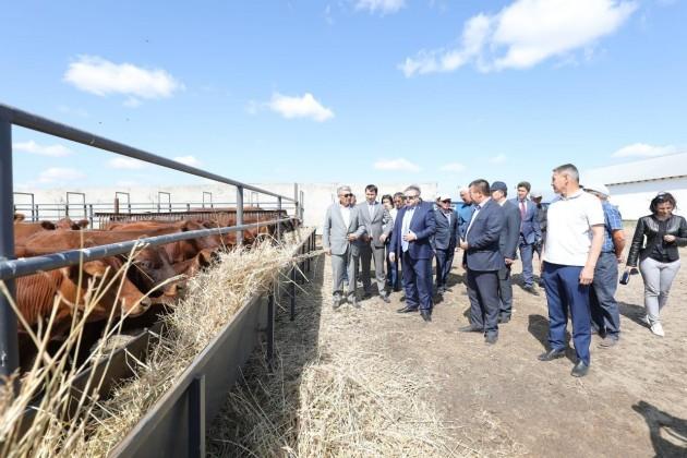 В Актюбинской области намерены активно развивать животноводство