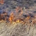 Степной пожар произошел в Павлодарской области