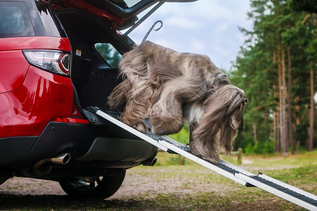 Что Land Rover предлагает для путешествий ссобаками?