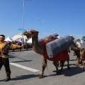 ИзТараза наЭКСПО отправился культурный караван