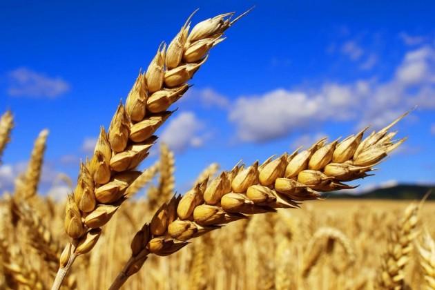 Россия предлагает создать «зерновую ОПЕК»