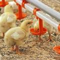 ВАктюбинской области появится новая птицефабрика