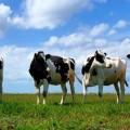 В Семее сделают упор на развитие молочно-товарного производства