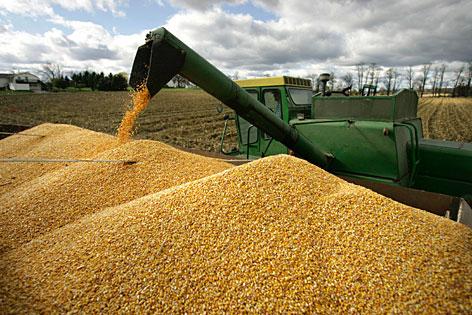 Перспективным рынком сбыта зерна из РК назван Китай