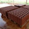 В Таразе запустили производство лего-кирпичей