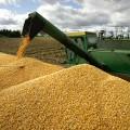 Экспортированы рекордные 12,7 млн. тонн зерна