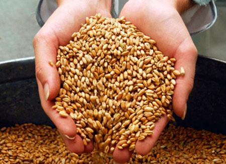 Плохая погода повлияла на экспорт зерна из РК