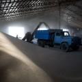 Bloomberg Grain изучает рынок РК