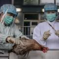 14 человек погибло от птичьего гриппа в Китае