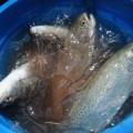 ВАтырау создадут управление рыбной промышленности
