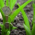 Аграрный бизнес привлек внимание инвесторов