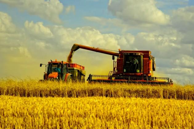 ФАО прогнозирует урожай пшеницы в744,5млн тонн