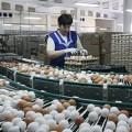 Тухлые яйца из России поступают в Казахстан