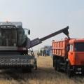 Уборка зерновых выполнена на 60%