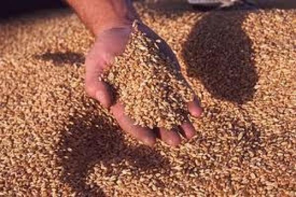 В Северном Казахстане уменьшится клин зерновых