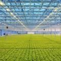 Польские инвесторы строят промышленную теплицу в Казахстане