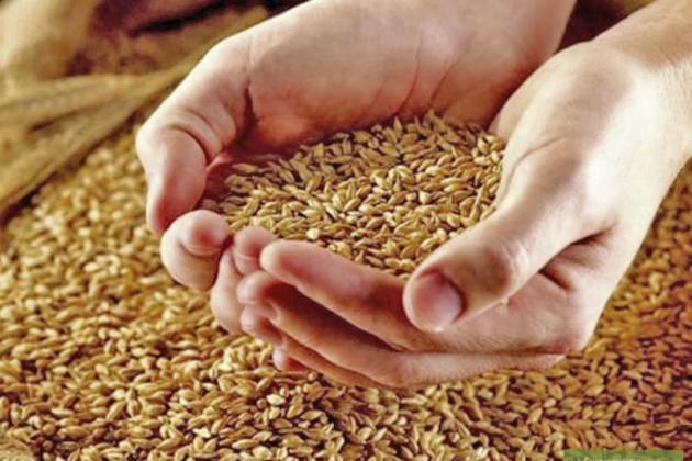 Мировые цены напродовольствие виюле выросли на10,2%