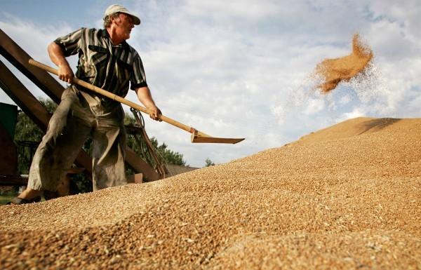 Урожай зерна составит 17 млн тонн