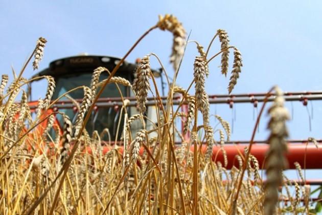 КазАгро поддержал посевные и уборочные работы на 92,8 млрд тенге