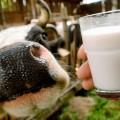 В РК наращивается промышленное производство молока