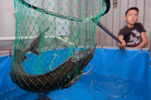Казахстанские рыбные хозяйства хотят создать корпорацию