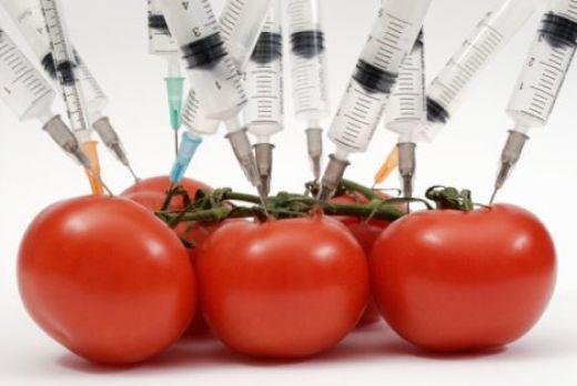 ГМО-продукты нельзя допускать на рынок РК