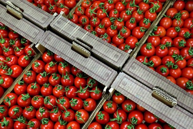Российское эмбарго разоряет фермеров Турции