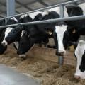 Малым семейным фермам в РК помогут закупить скот