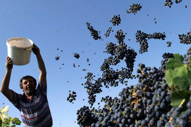 Роман Абрамович вложится в производство вина под Анапой