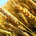Фермерам на западе РК выделят 700 млн тенге