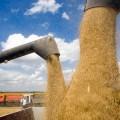 В следующем году сбор зерна увеличится