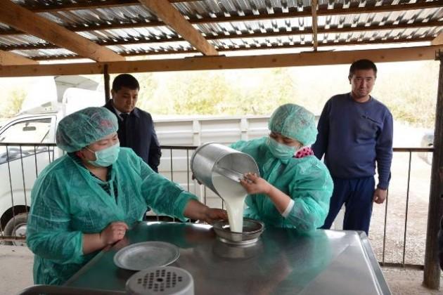 ВКазыгуртском районе ЮКО установили модульные пункты приема молока