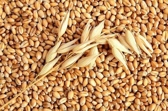 В некоторых регионах возможен дефицит семян