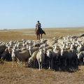 Фермеры РК заработают на поставках продукции в РФ