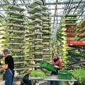 Голландцы построят в Алматы инновационные теплицы