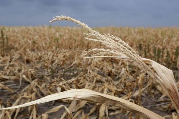 Заявки от аграриев принимаются до 20 ноября