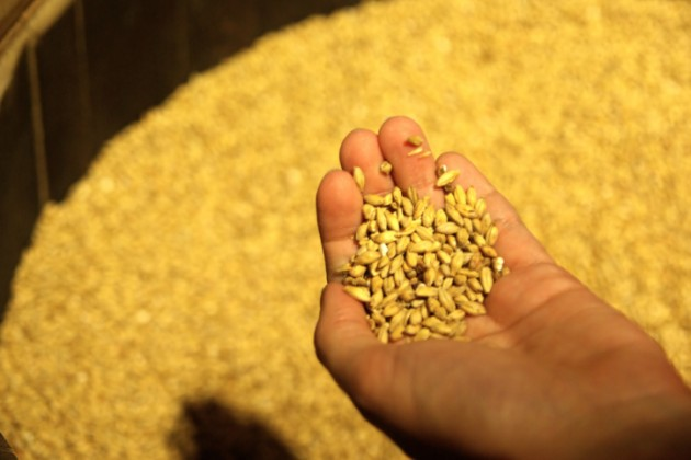 Рост производства зерновых в РК составит 40%