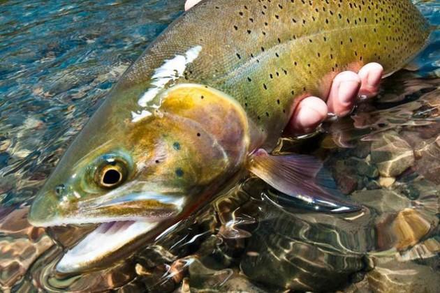 Хозяйство по выращиванию ценных видов рыб запустят в ВКО