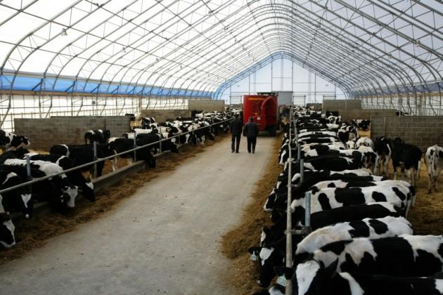 Аграрная отрасль Казахстана интересна чешским бизнесменам