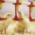 БРК профинансирует крупнейший проект вотрасли птицеводства