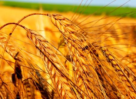 Более 8 млрд. тенге субсидий получат аграрии ВКО