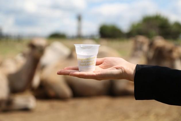 ВТуркестане построят завод попереработке верблюжьего молока