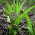Земли сельхозназначения иностранцам передаваться не будут