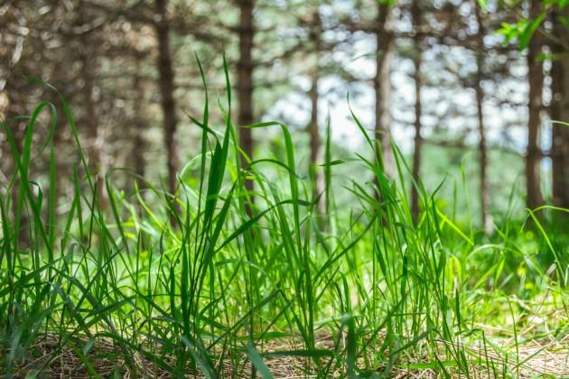 В Казахстане проведут аудит сельхозземель
