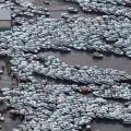 Крупнейшие японские компании приостановили работу из-за землетрясения