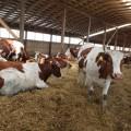 Крупные и средние сельхозпредприятия показали убыток в 40 млрд тенге
