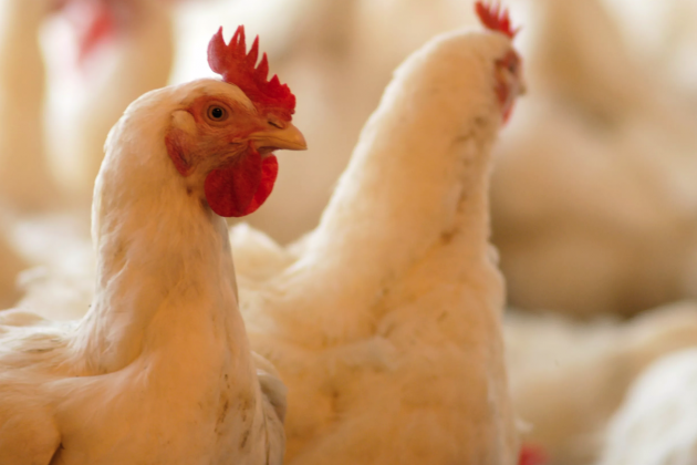 Казахстан временно запретил ввоз мяса птицы из Ирана