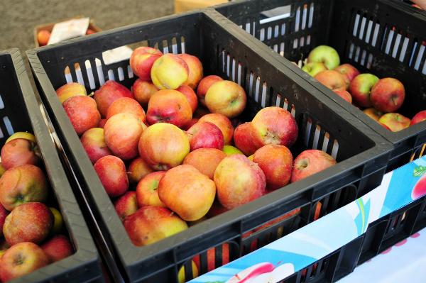 50% продаваемых в Казахстане яблок – импортные
